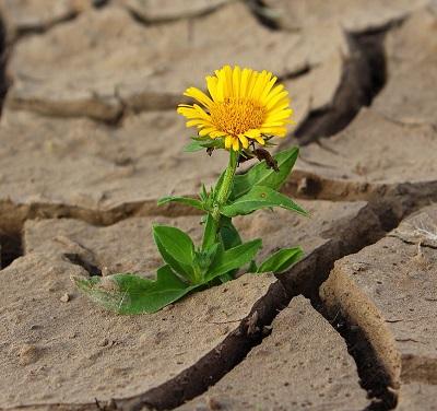 """В режим на оцеляване или в режим на растеж живеем – реакцията """"борба-или-бягство"""""""