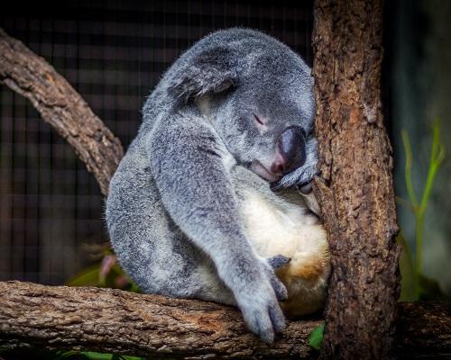 Сън, телесно и психично здраве