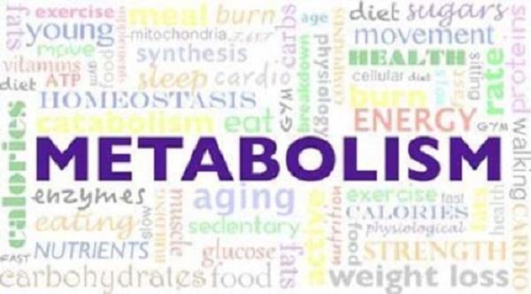Метаболизъм – защо има йо-йо ефект при загубата на тегло